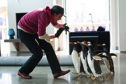Pono Poperio pingvinai (Mr. Popper's Penguins)
